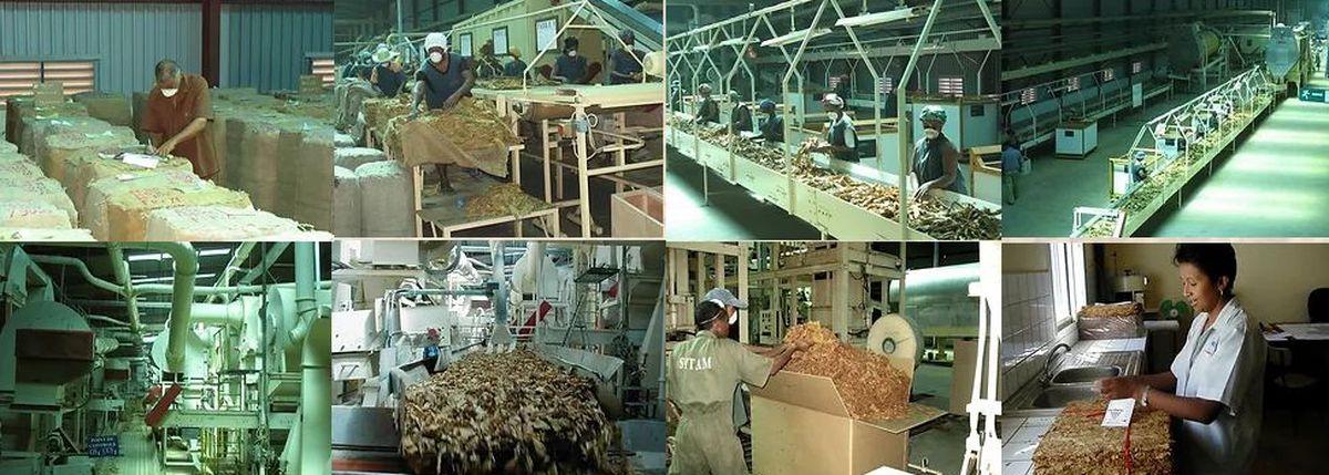 Madagascar a tout le potentiel pour développer l'industrie de la vape et de la cigarette électronique. Cela permettrait de réduire le tabagisme en quelques années. Mais un manque de volonté politique et une mauvaise idéologie font que la vape à Madagascar est totalement à la traine.