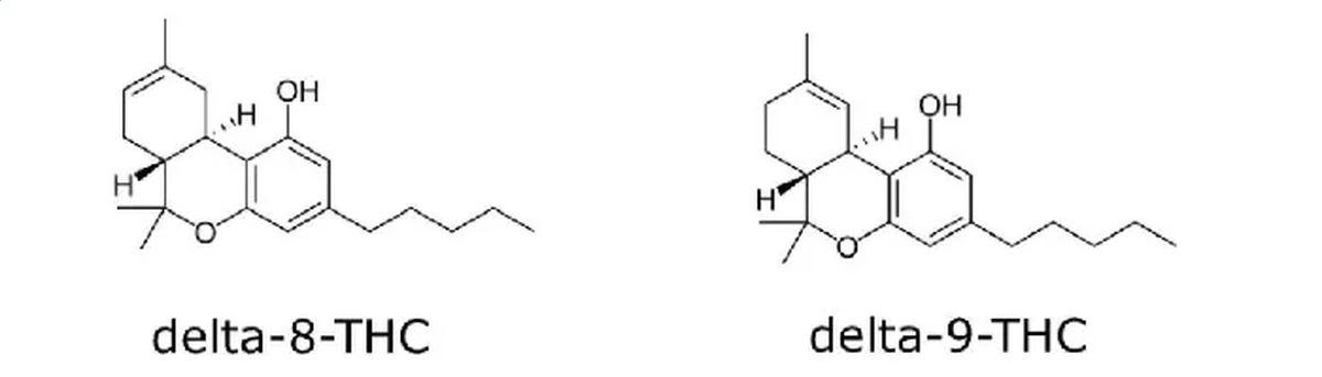 Pourquoi le Delta 8 THC bénéficie-t-il d'une telle hype ? Est-ce qu'il est miraculeux, quels sont ses effets, que dit la science. On vous dit tout.